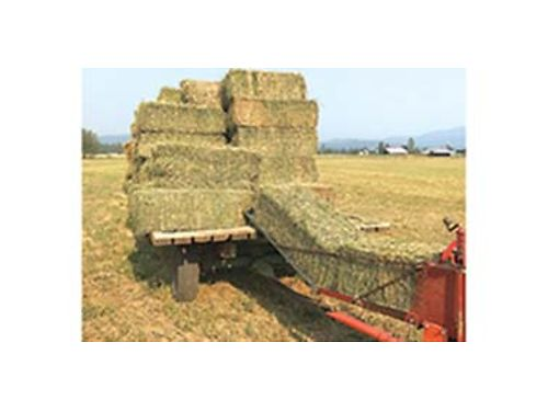 ALFALFA hay 6 bale barn stored no delivery no check no trades located in North Chattaroy Call