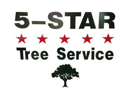 Professional Tree Removal  Pruning Certified Arborist Competitive Rates 803-640-5026