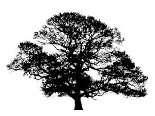 BW Tree Service Trimming Removal Lot Clearing Stomp Removal Free Estimates Insured 706-814-8449