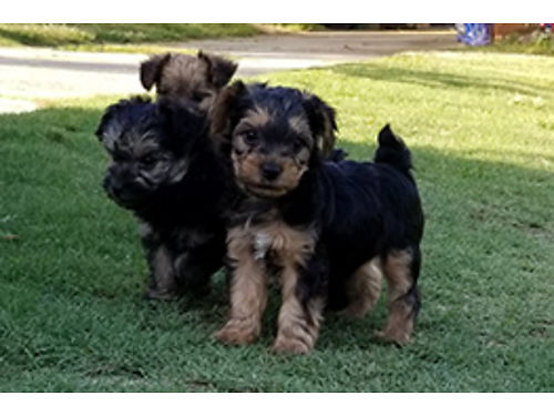 Augusta Pets for Sale and Adoption | Augusta Classifieds