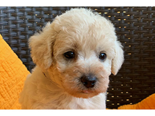 Myrtle Beach Dogs for Sale and Adoption | Myrtle Beach