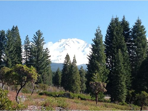 ESTATES of Mt Shasta 25 acre parcels astounding views 44000 Owner Financing available 5000