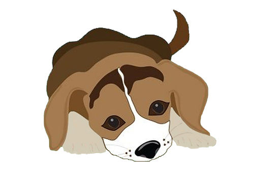 MONTH COTTONWOOD Small Animal Clinic Veterinary Care  Pet Supplies March is Spay  Neuter month f