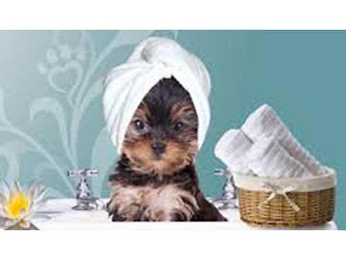 SOGGY PAWS PET GROOMING Personal Caring Enviornment With Individual Approach For ALL personalities