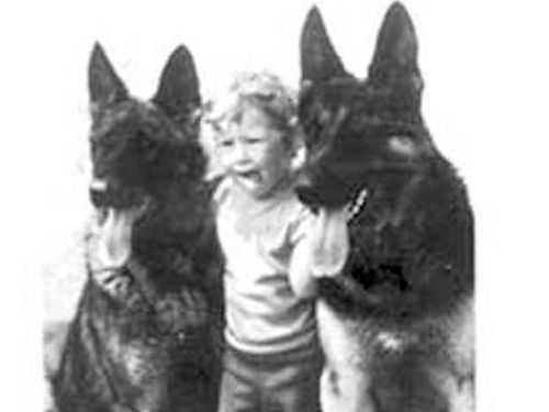 GERMAN SHEPHERD puppies Rare Reg Old Time Large Boned Beauties Rare black  red Rin-Tin-Tin look-