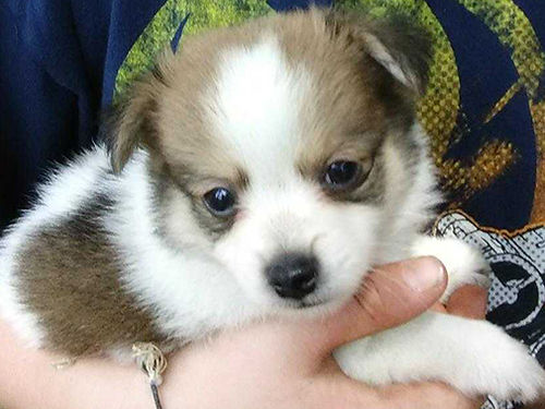 Wytheville Dogs for Sale and Adoption   Wytheville Classifieds