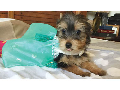 Find adorable dogs and puppies for sale online at recycler com!