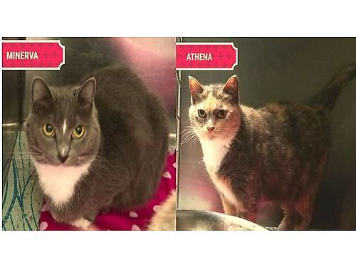 ATHENA  MINERVA are a unlikely bonded pair Minerva is 3 and Athena is 8 years old Athena is the