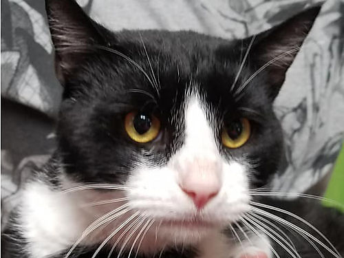PETER THE GREAT IS aptly named Hes a lovable 1yr old that adapts well to change  even allows you