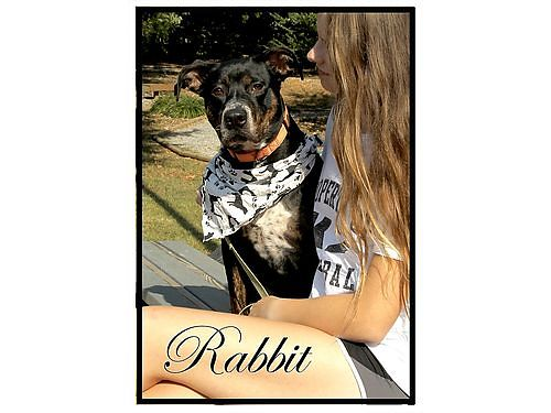 RABBIT IS A HAPPY GO LUCKY GUY that wants to hop right into a great home and his familys heart Ado