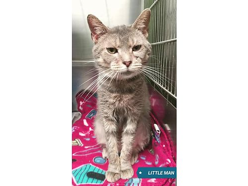 LITTLE MAN is the sweetest 2 year old boy He loves to snuggle and is super affectionate Adoption f