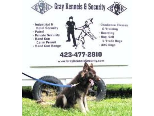 GRAY KENNELS  SECURITY We Provide Licensed Armed Unarmed  K-9 Security Officers For Various Indus