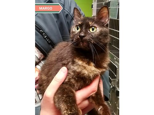 MARGO is a 3 year old sweetheart with a ton of love to give Adoption fee 110 includes spay microc