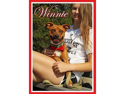 WINNIE IS A CUTE little girl terrier mix who is 1 to 2 years old She loves to play and would love t