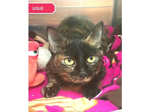 LESLIE was a young mother that raised her kittens well and is now looking to be someones baby Adop