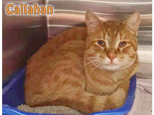 CALLAHAN is a super sweet guy who was found wandering This total lovebug will eat out of your palm