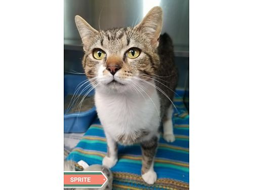 SPRITE is a 2 year old female with tons of personality Adoption fee 110 includes spay vaccines m