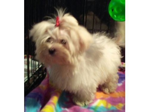 Caledonia Pets For Sale And Adoption Caledonia Classifieds